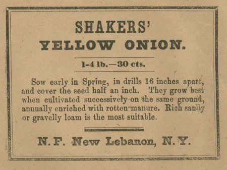 Shaker-Yellow-Onion