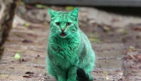 green-cat-Bulgaria