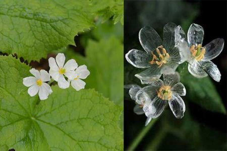 Skeleton-flower