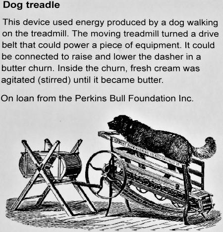 dogtreadmill2