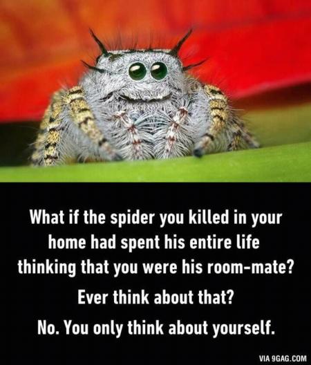 spideroomate